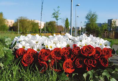 Dzień Dobrego Słowa Dla Polski Iwona Majewska Opiełka
